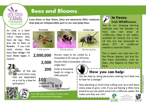 info bees and blooms