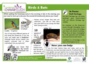 info birds and bats