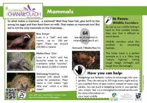 info mammals